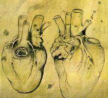 Anatomical study of human heart - Pen and ink  by philopoodle