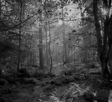 The Gray Woods. by Eric Said