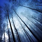 Blue Forest by Philippe Sainte-Laudy