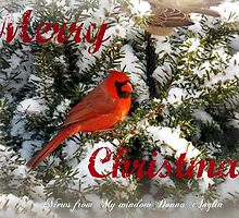 Merry Christmas by Donna Anglin Husband