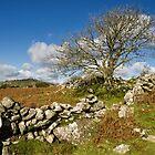 Lone tree on Dartmoor by peteton