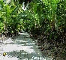 07 - Tropical Path by Rob Blackwell