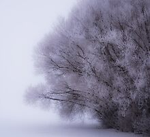 Winter Beauty 7365_12 by Ian McGregor