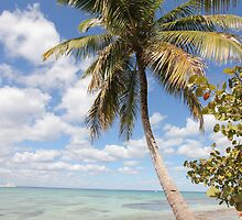 Isla Saona - Palm Tree at the Beach by stine1