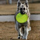 Frisbee Fun by Keala