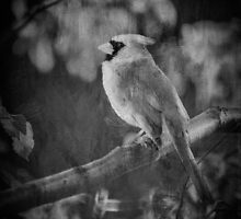 Red Bird In Black And White by Lois  Bryan