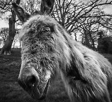 Snotty Donkey - Atishoo! by Heidi Stewart