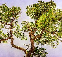Curly Pine by LudaNayvelt