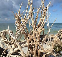 Driftwood Sculpture by Rosie Brown