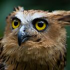 The Owl Stare by byronbackyard