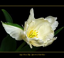 Super Parrot Tulip by didibaev