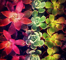 Modern Terrarium Plants by Olivia Joy StClaire