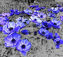 Purple Anemones For Everyone  by hannahsview