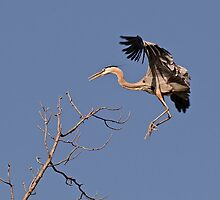 Leap Of Faith by Heron-Images