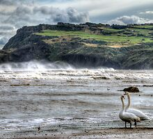 Swans on the Beach - Robin Hoods Bay by © Steve H Clark