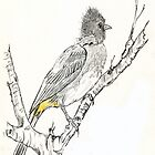 Black-eyed Bulbul in my garden by Maree  Clarkson
