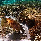 Marine Life by Jaxybelle