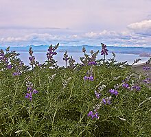 Lupine and Ocean Scene by John Butler