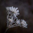 Frostwork by TOM KLAUSZ
