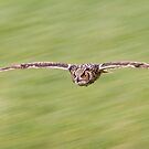 Indian Eagle Owl Inflight by Margaret S Sweeny