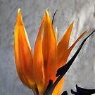 SAN DIEGO BIRD  by heatherfriedman