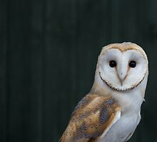 Barn Owl portrait by dulciemaephotos