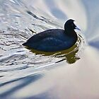 Coot In The Swirls by Susie Peek
