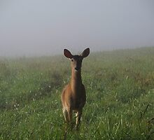 Doe In The Fog by KellieSharpe