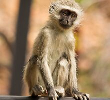 Monkey on the Terrace by vivsworld
