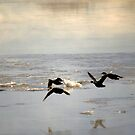 Ducks by lumiwa