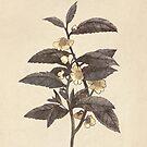 Late Bloom  by Terry  Fan