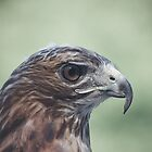 Portrait of a Red Tail by Denise Worden