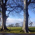 Beautiful Trees At Cricket St Thomas, Somerset.UK by lynn carter