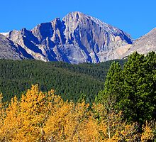 Longs Peak Autumn Aspen Landscape View by Bo Insogna
