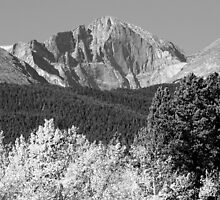 Longs Peak Autumn Aspen Landscape View BW by Bo Insogna