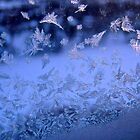 Frosty window by Shulie1