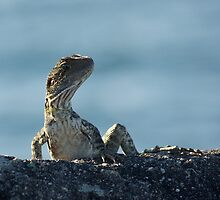 water dragon - australian lizard by GrowingWild