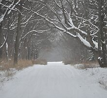 Snowy Road Print by eawhite2012