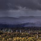 no mans land -the tarkine by Kip Nunn