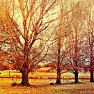Autumn Day at Glennifer by wallarooimages