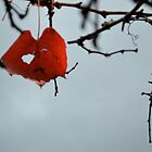 The Last Leaf by kiwilover
