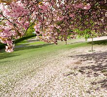 Blossom on the Grass by maxblack