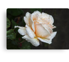A Christmas Rose For You ♥ Canvas Print