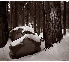 Sunlight on a Winter Woods by Wayne King