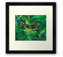 red admiral - green eyes Framed Print