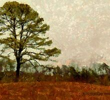 Solitary Pine by Jean Gregory  Evans