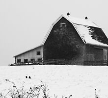 Barn with Snow (Black and White) Wellington N.S. by Debbie  Roberts