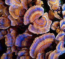 Magic Mushrooms by Raymond Park