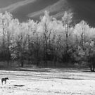 horse in the frost by dc witmer
