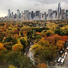 Central park November 2013 by Danny  Daly